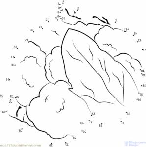 coliflor romanesco