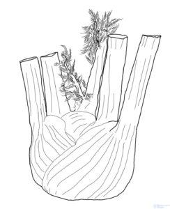 como cultivar apio españa