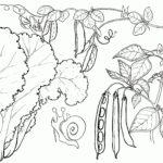 como dibujar frutas y verduras