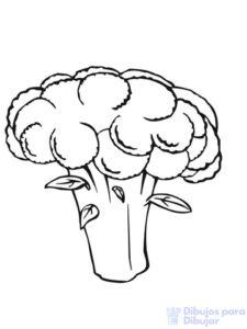 dibujo de brocoli