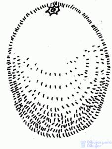 figuras con kiwi