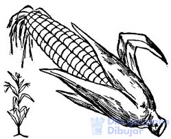 fotos del maiz