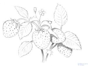 fresas pintadas