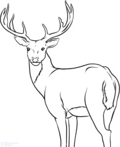 imagenes de renos animados