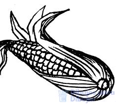 imagenes sobre el maiz