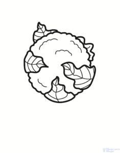 la coliflor 1