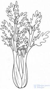 para que sirve el apio españa como planta medicinal