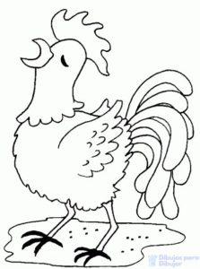 pollo caricatura