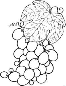 racimos de uvas para imprimir