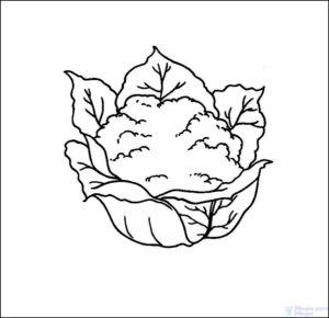 variedades de coliflor 1