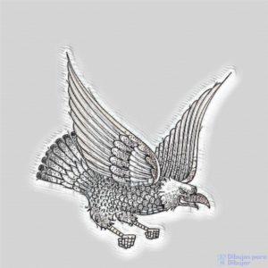 Aguila Imagenes