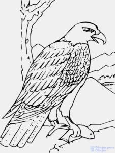 Aguila para Colorear