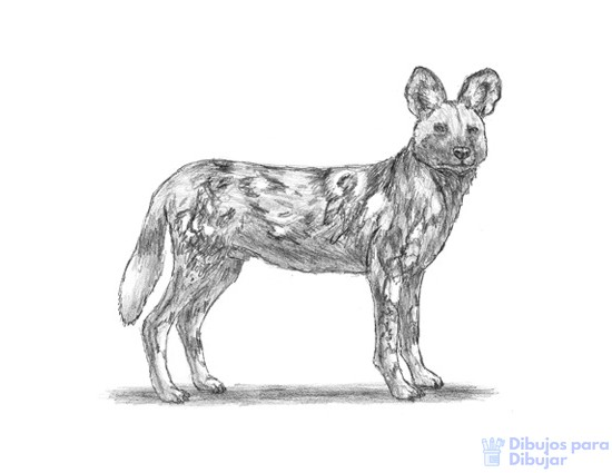 animales para pintar e imprimir 1