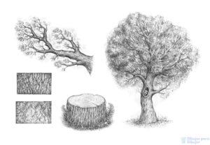 arbol sin hojas dibujo