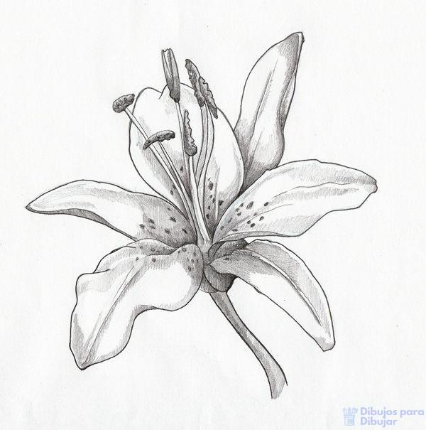 azucena flor imagenes