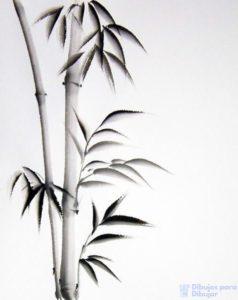 bambu imagenes