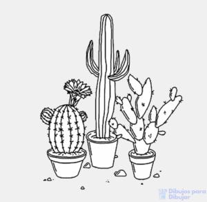 cactus en dibujo