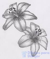 colores de azucenas flores