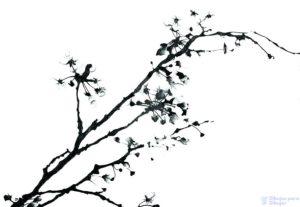 cuadros de cerezos en flor