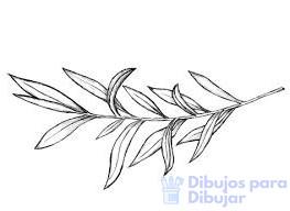cuidados del olivo