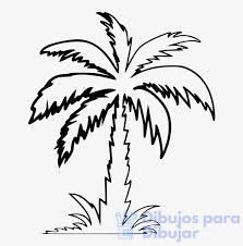 dibujo palmera infantil