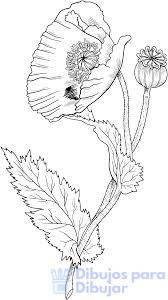 dibujos amapolas para pintar