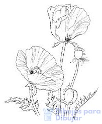 dibujos de amapolas para pintar en tela