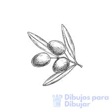 dibujos de olivos y aceitunas