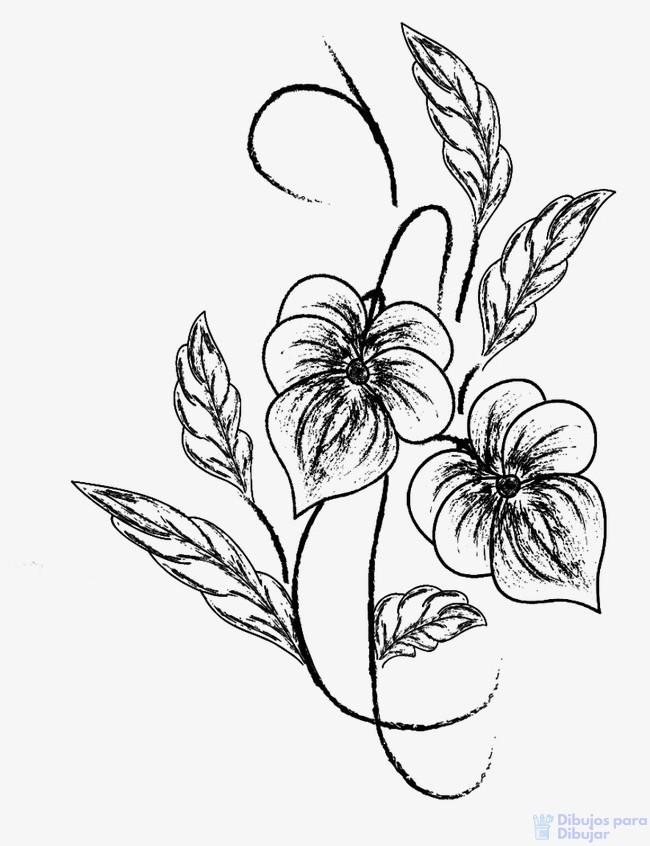 dibujos de orquideas a lapiz