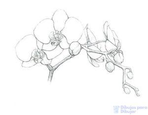 dibujos de orquideas pintadas