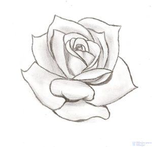 dibujos de rosas bonitas