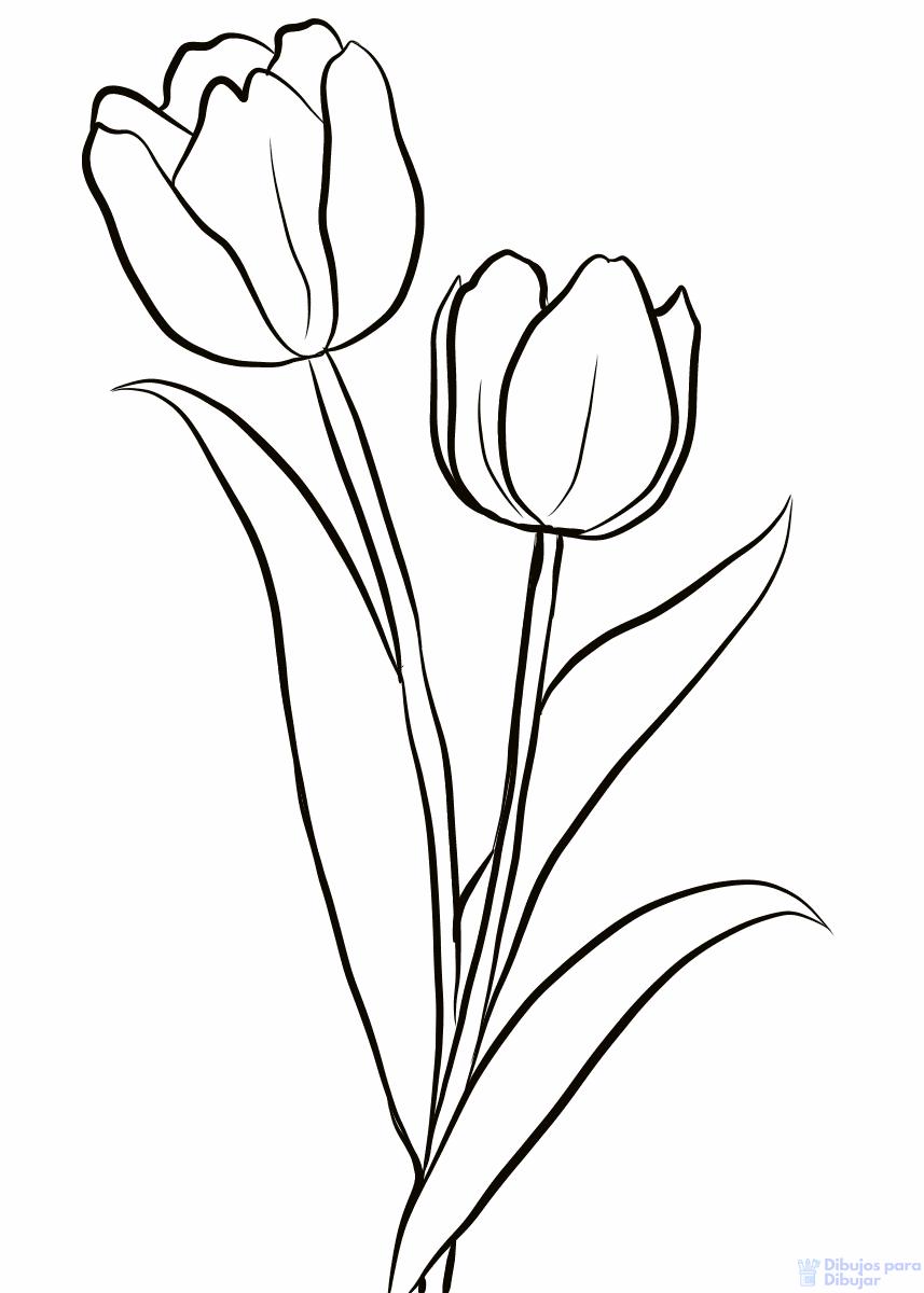 Dibujos De Tulipanes 900 Lindos Trazos Florales