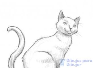dibujos para colorear animales
