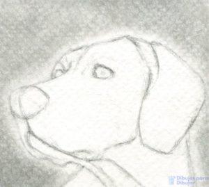 dibujos para dibujar animales