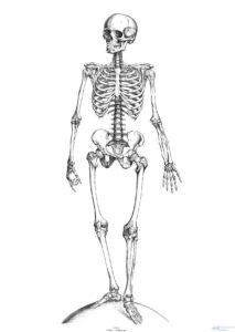 esqueleto animado