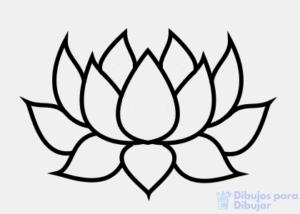 flor de loto colores