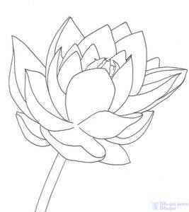flor de loto dibujo a lapiz