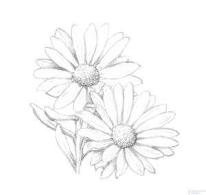 flor margarita para pintar