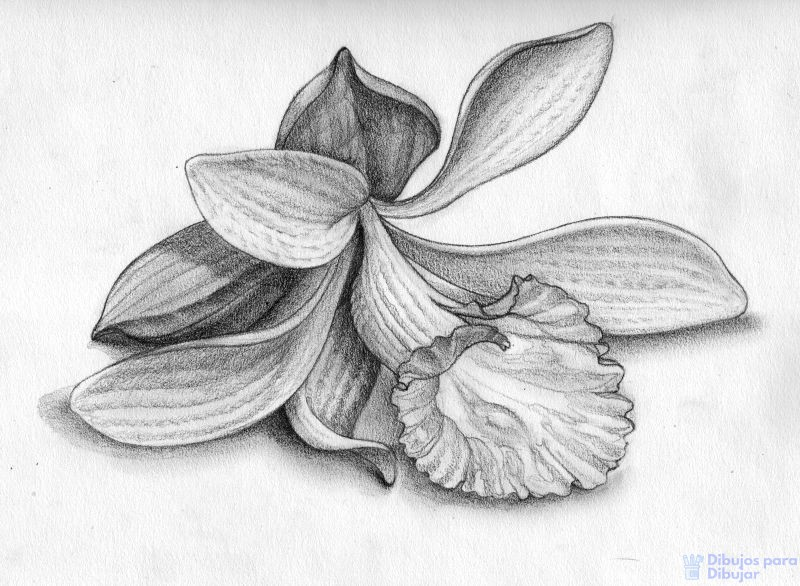 flores orquideas imagenes