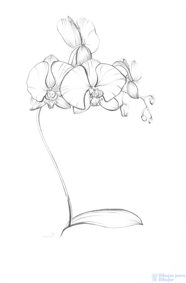 flores orquidias