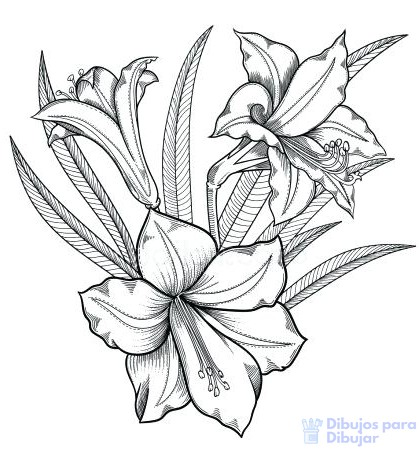 fotos de flores azucenas
