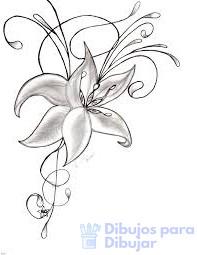 fotos de orquideas
