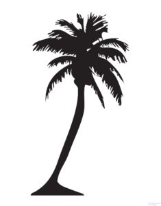 fotos de palmeras de jardin