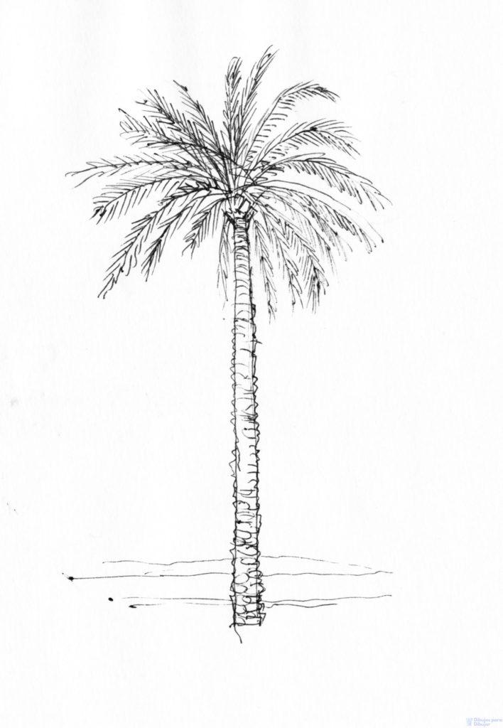 fotos de todo tipo de palmeras