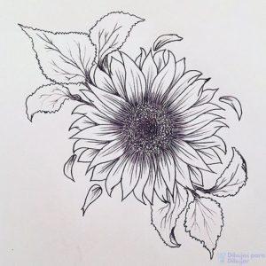 girasoles para dibujar