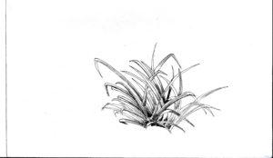 imagenes de arboles arbustos y hierbas