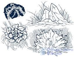 imagenes de arboles hierbas y arbustos