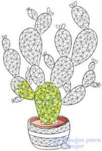 imagenes de cactus florecidos