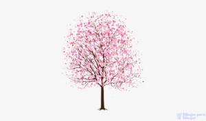 imagenes de cerezos en flor