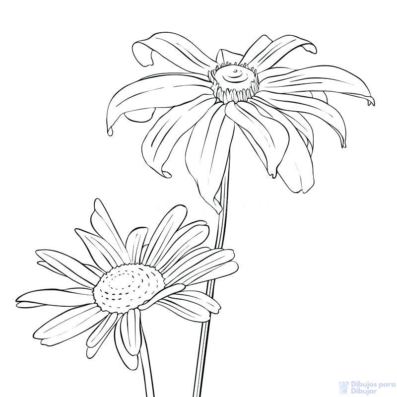 imagenes de flores margaritas